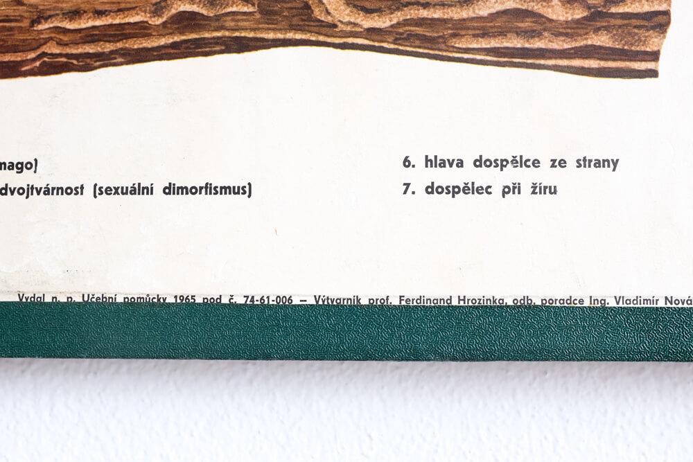 DSCF3202